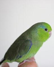 08-25-16_little-green-male-img_9222