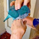 Blue Quaker