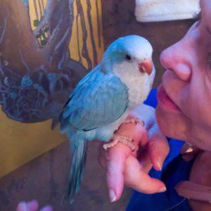 Pallid Blue Quaker